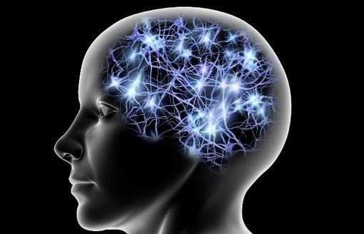 Come prevenire l'invecchiamento cerebrale: importante scoperta da ricercatori dell'Università di Torino