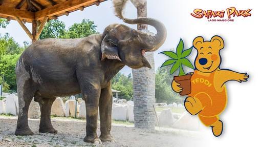 L'elefantessa Maya, adottata a distanza, e Teddi aspettano i bambini al Safari Park Lago Maggiore