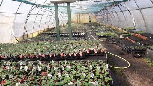 VIA LIBERA DAL GOVERNO. «La vendita di semi, piante, fiori ornamentali e in vaso e fertilizzanti è consentita»