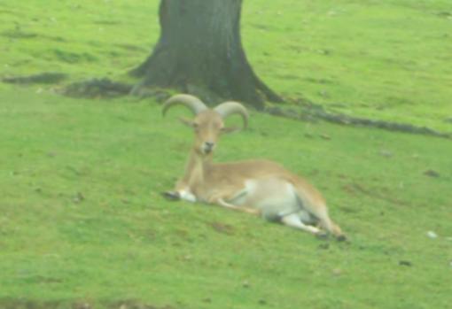 Coronavirus: al safari park di Pombia gli animali rischiano ancora di rimanere senza cibo
