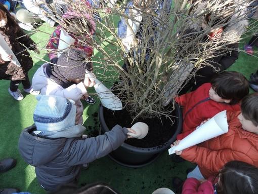 Pavia e provincia: sabato prossimo alberi di melograno contro il cancro infantile in sei scuole del pavese
