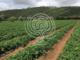 ORTO - perché utilizzare il Biochar BioDea e Distillato di Legno BioDea per il trattamento del terreno?