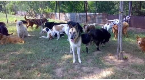 Robbio, l'Oasi Shangai chiede aiuto con una raccolta online per le profilassi del branco di cani ospitati nella struttura