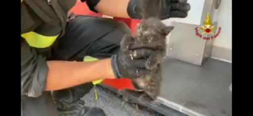 VIDEO. Pavia: i Vigili del fuoco salvano un gattino incastrato sotto una macchina per fototessere