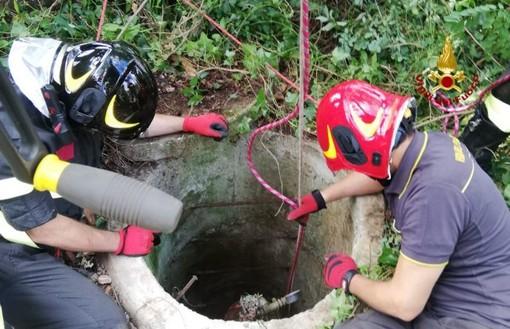 Pieve Albignola: esemplare di Setter cade in un pozzo di 15 metri e viene salvato dai Vigili del Fuoco
