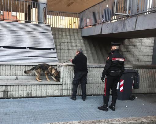 Pavia: denunciato un 18enne e segnalati altri otto giovani consumatori di stupefacenti, durante un controllo dei carabinieri in alcune scuole superiori cittadine