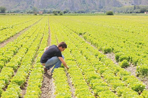 """Decreto sostegni, Coldiretti: """"Subito risorse a filiere in crisi senza aiuti 4 aziende agricole su 10"""""""
