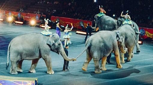 Lombardia, il Consiglio vota NO alla mozione per vietare gli animali al circo