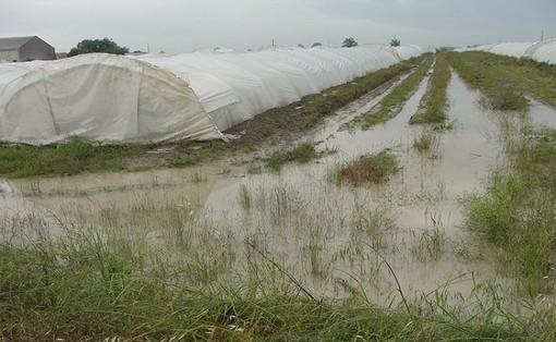 Maltempo in Lombardia, per Coldiretti milioni di danni al comparto agricolo