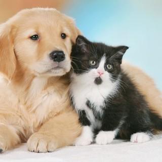 S. Antonio, spesa da  500 milioni  per cani e gatti in Lombardia
