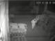 Così la banda assaltava i magazzini di alcolici e prodotti ittici: 100mila euro il bottino