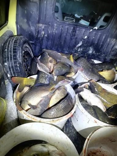 Pesca illegale: due denunciati dalla Polizia locale di Trecate e dalle Guardie giurate volontarie ittiche Fipsas