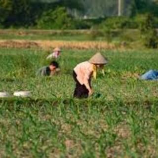Ue: Coldiretti, stop a riso Cambogia dai produttori europei