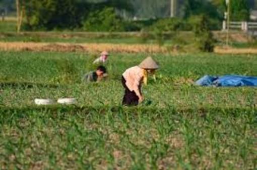 Ue: Coldiretti, ok salvaguardia, boom riso da stragi Birmania (+213%)