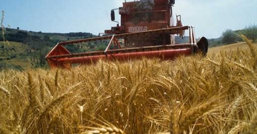 Agricoltura: 3 milioni per avvio o ricambio generazionale di 117 aziende a gestione under 40