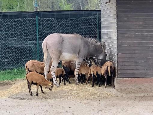 Safari Park: «Grazie per gli alimenti agli animali. Aiutateci acquistando un biglietto da usare entro il 31 dicembre 2021»