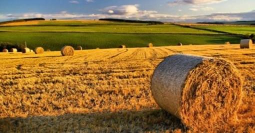 Agricoltura: boccata d'ossigeno, 20 milioni di euro per le aziende agricole lombarde