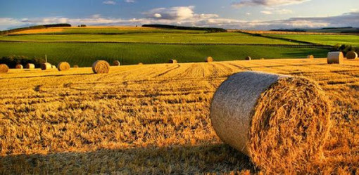 Coronavirus: Coldiretti, bonus Inps per 650mila agricoltori