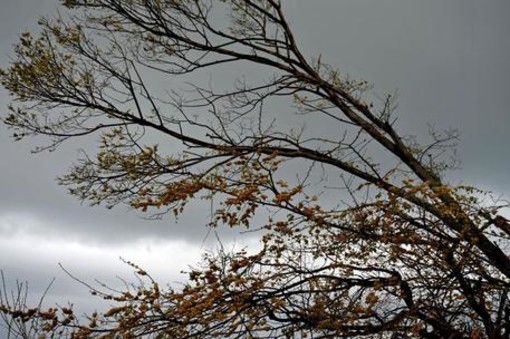 Lombardia, allerta meteo per vento forte: martedì 6, fino alle 18